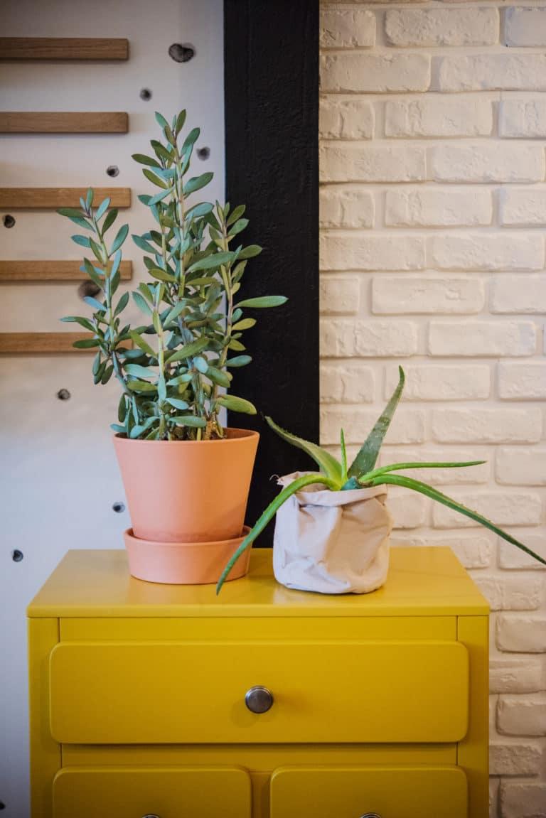 Deux plantes sur un petit meuble jaune